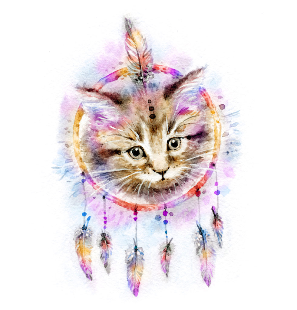 Un chat et son dreamcatcher