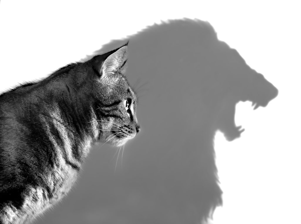 L'ombre et le moi