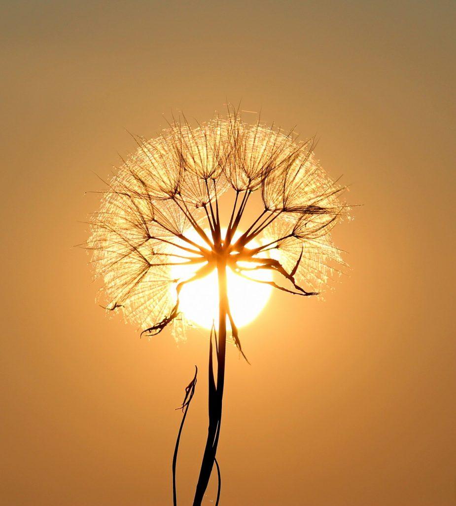 Fleur de l'âme