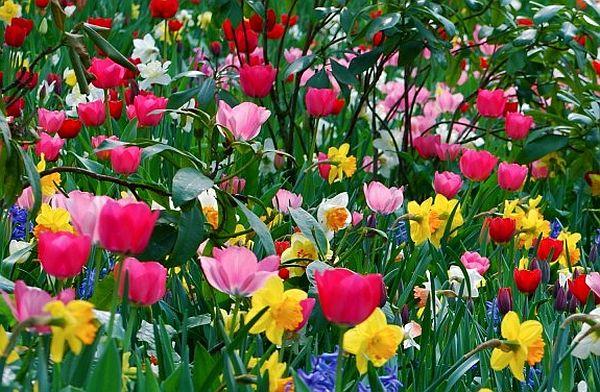 Fleurs de printemps, équinoxe