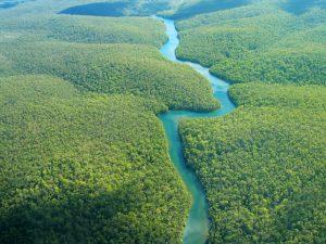 La 2ème plus grande forêt du monde