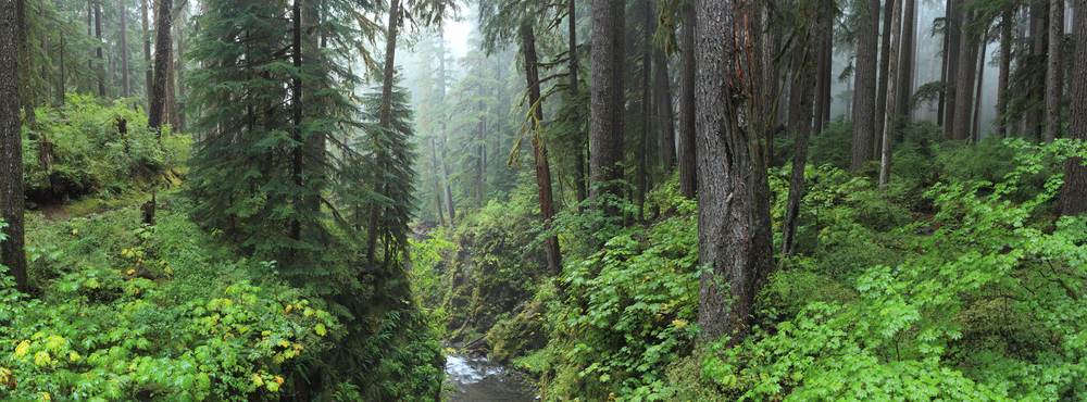 Une forêt primaire remplie de mythes et de légendes