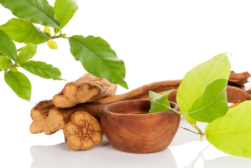 Feuilles et racine d'ayahuasca