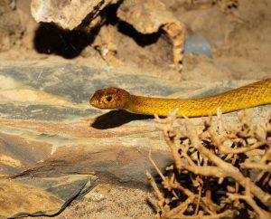 Serpent symbole de mystère et de sagesse