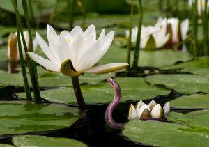 Serpent de la prise de conscience